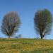 Frühling pur im Appenzellerland