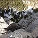 Bereits nach der zweiten Schlüsselstelle - das Seil hängt im Bohrhaken, welcher in Aufstiegsrichtung nach links sehr ausgesetzt zeigt. Ich entschliesse mich durch das mit lockeren Steinen versehene Kamin in Aufstiegsrichtung rechts hochzusteigen (II).