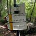 Nel bosco in salita verso la Fonte Sambrosera