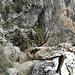 L'arrivo del sentiero (in parte attrezzato) che sale dalla bocchetta Moregge lungo la cresta ovest