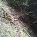 Sentier abandonné qui relie Wyssweidji à Albenried.