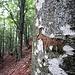 Sopra Perostabbio, al camoscino intagliato, con visibile la freccia gialla dell'inizio del tratto settentrionale del Sentiero delle Guardie. La foto è di un paio di anni fa.....