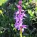 Irgendeine Orchideenart