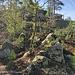 Große Freifläche in J.-A. Martin, hier sind neben recht hohen Bouldern und ein paar Pflichtsprüngen auch einige Verbindungswege zu gehen. Die ständige Abwägung zwischen Kletter- und Zustiegsschuh bestimmt das Mindset...