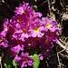 Blumenfreude gleich zu Beginn