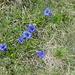i fiori della primavera....finalmente