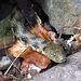 Eine andere Würfelnatter schaut aus ihrem Versteck.