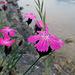 Schönheiten am Ufer.