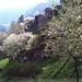 Mayens et cerisiers en fleurs en dessus de Rormatta.