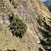 Steilgrasstelle am Ausstieg des Bachbetts.