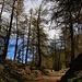 Frühlingserwachen oberhalb Guarda, die Lärchen sind gerade am austreiben. Bei Clüs auf 1800m erreicht man den Bergwald und das Strässchen wird nun deutlich flacher.