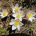 einfach schön, schönste Blumen auf über 2400 Meter.