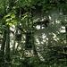 Ruderi fagocitati dal bosco