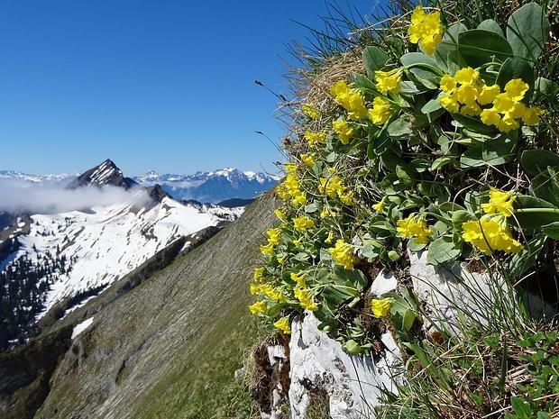 Blumenwand in der Steilstufe