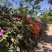 tolle Blütenpark im Schlossgarten