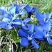 die Farbe blau ist in der Natur besonders schön, weil so selten...