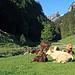so idyllisch hier im Appenzellerland