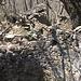 ein alter Brunnenschacht im Walde