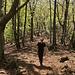 weiter hinauf durch den Wald