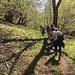 durch lichten Frühlingswald