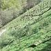 Steile Viehweiden. Ziegen im hinteren Val della Crotta