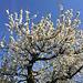 toller Frühlingstag im Tessin