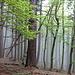 Durch Nebelwald - untypisch fürs Tessin wie uns scheint