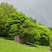 Farbiger Wald und eine Hütten-Ruine bei Cozzo