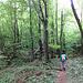 Durch grünen, feuchten Wald gegen den Monte San Giorgio