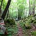 Fast schon unheimlicher Märchenwald bei Pozzo