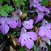 Der Frühling ist ideal um die vielen Blumen zu geniessen