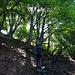 Durch Laubwald gegen den Monte Ferraro