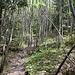 Immer noch tief im Wald, aber langsam erhebt sich das Gelände wieder.