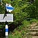 Von Schuttannen her kommend ist das der Einstieg in den wbw markierten Normalweg auf den Bocksberg.