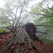 Wald auf dem Adler