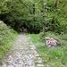 Abstieg auf dem sehr schönen, alten Weg nach Camporgna
