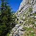 """Zwischen Tanne und Felswand geht der """"Weg"""" hoch zum Gipfel. Artus wartet auf mich."""