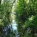 Erinnert an Mangroven.
