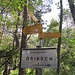 Grün überdachte und mit unzähligen Nagefluhfelsbrocken überzogene Waldpassagen brachten uns an diese Verzweigung. Wir verließen hier aber den markierten Weg und folgten einem kartierten Pfad, der erst auf Höhe von P. 1057 mit etwas Höhenverlust nach Westen zum Bergwanderweg querte