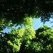 Die Farben des Frühsommers grün und blau.