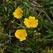 Blumenbilder hätte man heute ohne Ende schiessen können. Der Bergfrühling ist in vollem Gang.