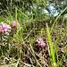 Blumen und Ameisen