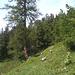L'ancien sentier Riti - Bidemji.
