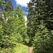 sonniger Abschnitt im Wald