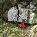 eine seltene Blume? Nein, offenbar eine Grabstelle mitten im Wald