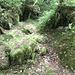 Höhlen im Waldboden...wo sind die Trolle?