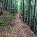 Waldpassage in Frankreich