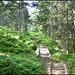 Schön angelegter Wanderweg durch den Mösliwald