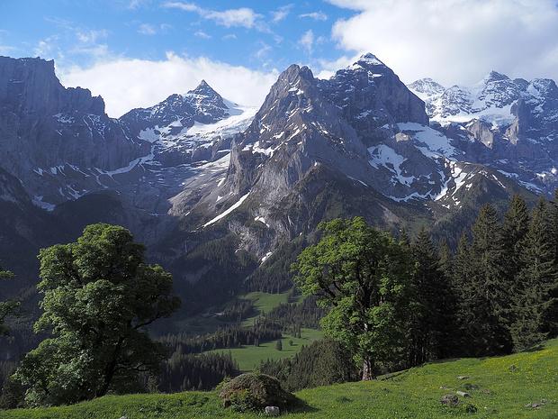 Hinten die mächtigen Berge des Rosenlauitals. Vorne nicht minder mächtig zwei Bergahornbäume.