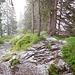 Unterwegs zum Großen Ochsenkopf<br /><br />Kurz vor dem Gipfel überraschte uns ein Gewitter mit Hagelschauer, so das wir zum Berghaus Schwaben abstiegen<br />